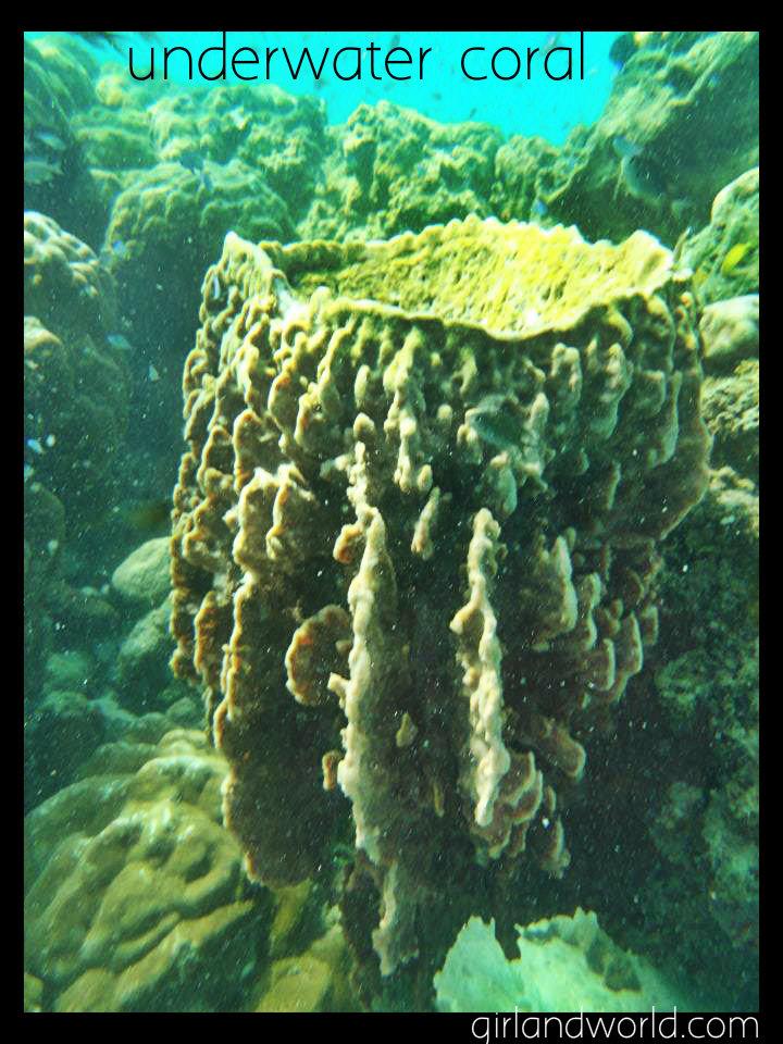underwater-coral