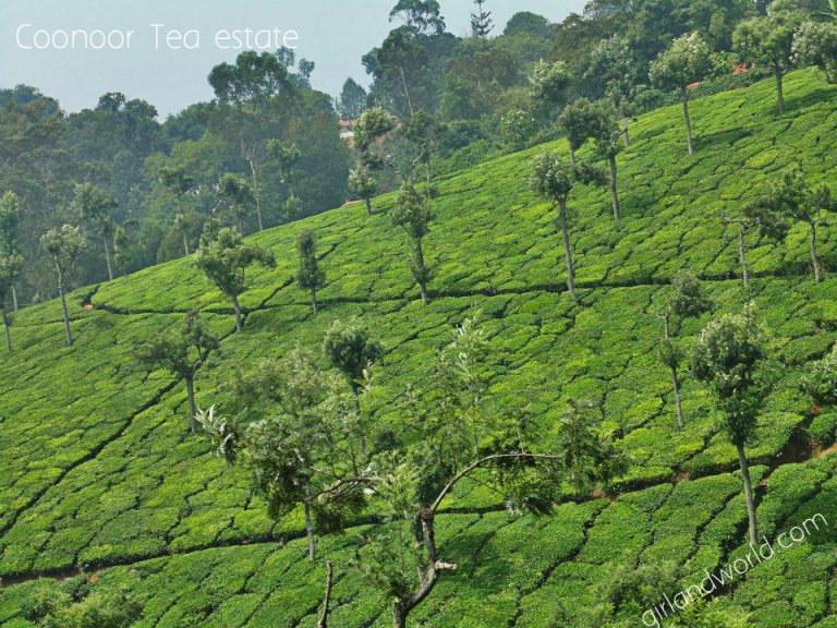 ooty honeymoon