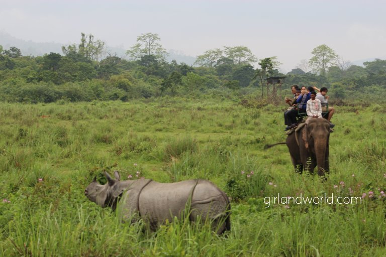 Kaziranga national park assam india wild life sanctuary elephants tiger reserve world heritage site where to stay when to visit at Kaziranga best elephant reserve one horned rhinoceros