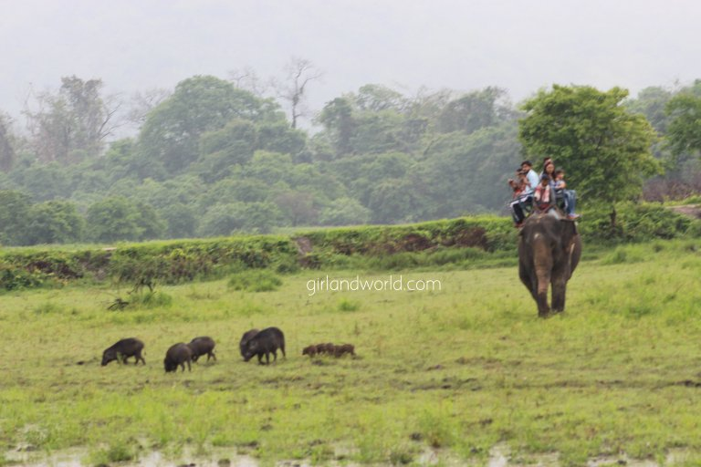 Kaziranga National park and wildlife sanctuary and world heritage site elephants one horned rhinos nature jungle