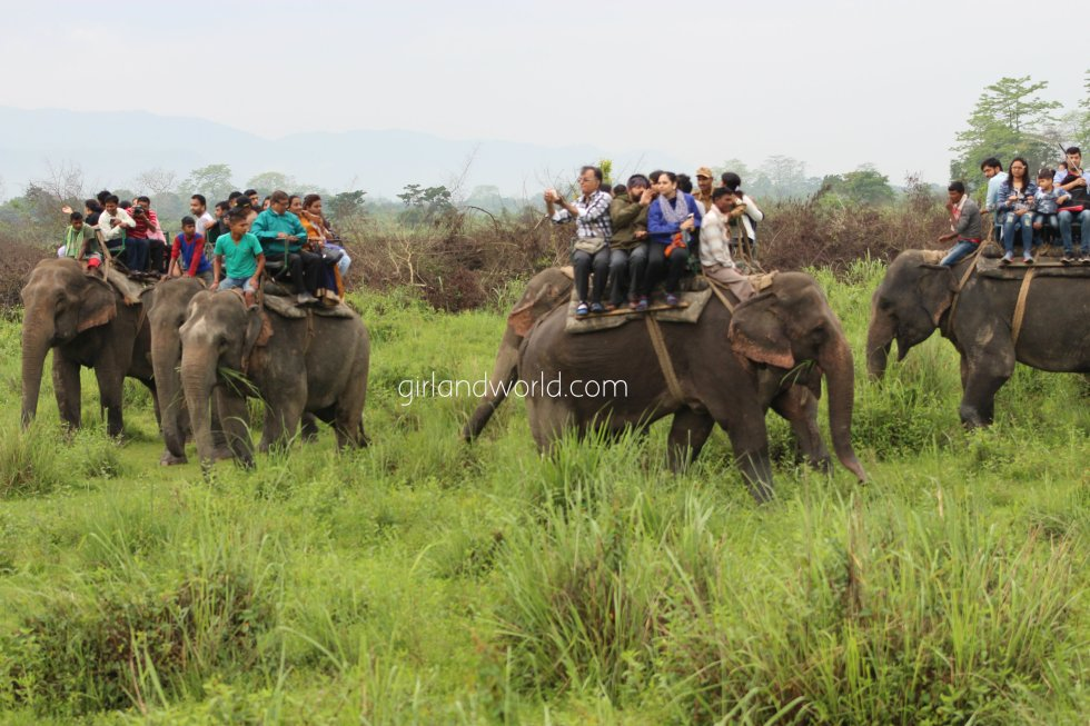 Kaziranga national park how to visit where to stay when to visit
