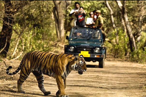 Jim Corbett national Park, Dhikala Forest Lodge, Jim Corbett National Park Booking Best resort in JIm Corbett Tiger reserve Park India largest Tiger reserve oldest National Park in India wild life photography nature lover honeymoon destination